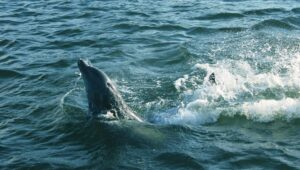 Dolphins on Vero Beach Sightseeing Cruise
